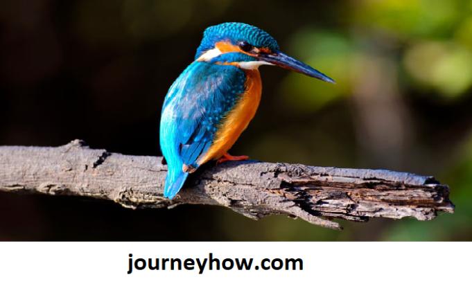 Largest Bird Sanctuary in India